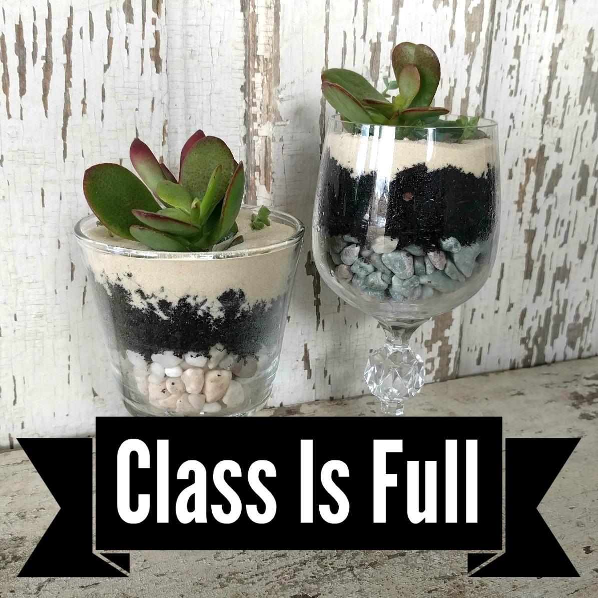 Succulent Plants/Craft